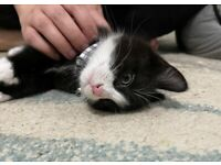 Cute make kitten ready for rehome