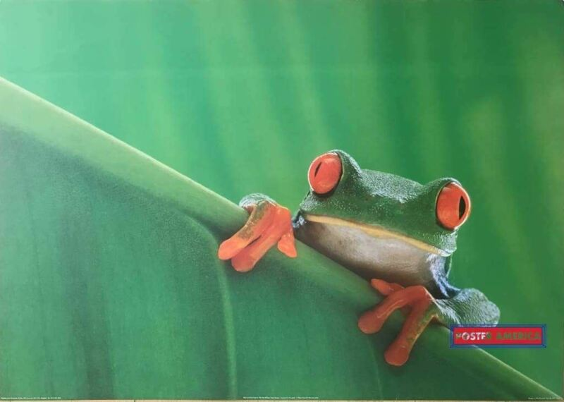 Red Eyed Tree Frog Vintage 1995 UK Import Poster 24 x 34