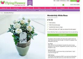 Beautifully White Roses