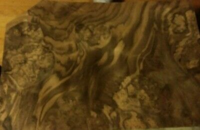 1 Piece Of Buckled Walnut Burl Wood Veneer 11 X 15 58