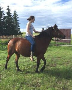 Bay horse for sale !