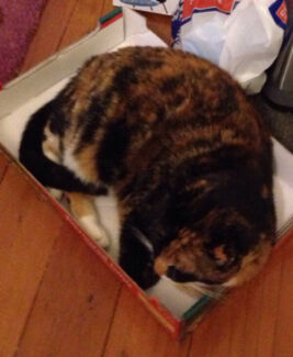 CAT/HOUSE SITTING FOR CHRISTMAS! Canterbury Canterbury Area Preview