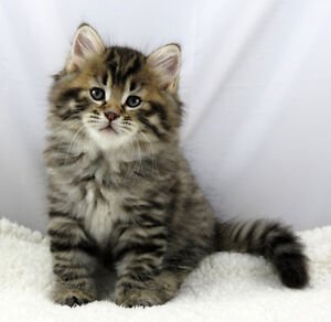Looking for one or two kittens
