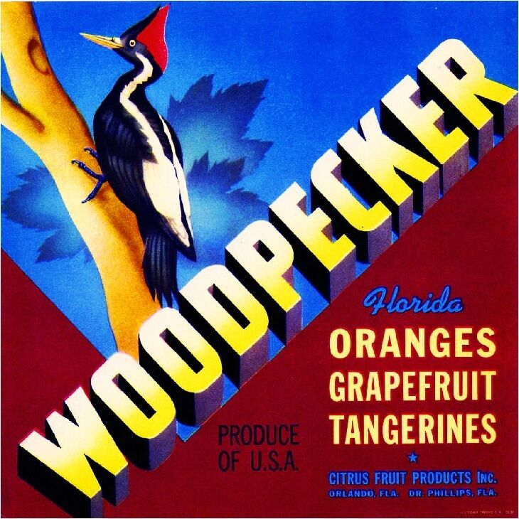 Orlando Florida Woodpecker Bird Orange Citrus Fruit Crate Label Art Print