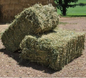 Hay For Sale: small square bales.