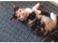 9wk old kitten