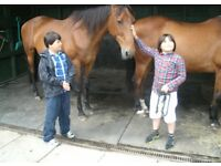 Spiritatplay. Equine Assisted Well Being Centre. A self development programme using horses.