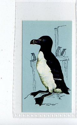 (Jd4247) TETLEY,BRITISH BIRDS,RAZORBILL,1970,#39