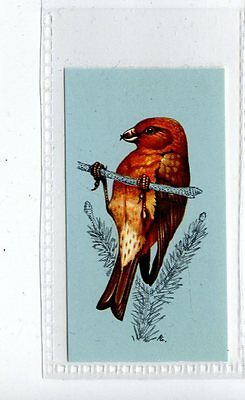 (Jd4231) TETLEY,BRITISH BIRDS,CROSSBILL,1970,#31