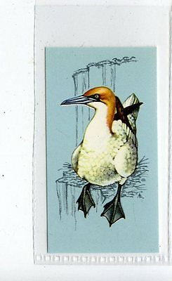 (Jd4243) TETLEY,BRITISH BIRDS,GANNET,1970,#37