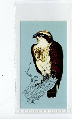 (Jd4263) TETLEY,BRITISH BIRDS,OSPREY,1970,#47