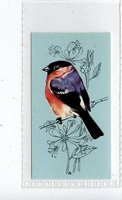 (Jd4183) TETLEY,BRITISH BIRDS,BULLFINCH,1970,#7