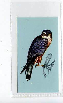 (Jd4207) TETLEY,BRITISH BIRDS,MERLIN,1970,#19