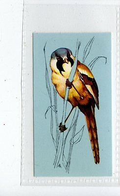 (Jd4259) TETLEY,BRITISH BIRDS,BEARDED TIT,1970,#45
