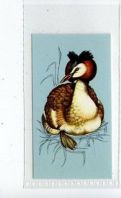 (Jd4255) TETLEY,BRITISH BIRDS,GREAT CRESTED GREBE,1970,#43