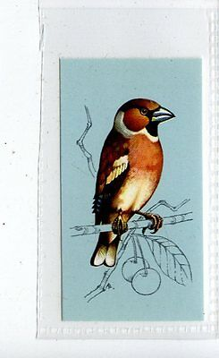 (Jd4219) TETLEY,BRITISH BIRDS,HAWFINCH,1970,#25