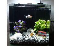 AquaNano 30 Aquarium Fish Tank