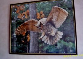 FRAMED PICTURE OF A GREAT HORNED OWL