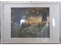 White frame with woodland with white flowers