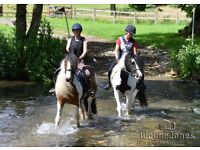 Fantastic horse riding opportunity available in Arborfield