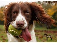Dog Walker in York - Good Boy Pet Services, professional dog walking service