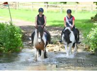 Fantastic horse riding opportunity based in Arborfield - Berkshire