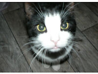 1yr old adorable cat free to loving home