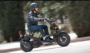 Wanted Honda Ruckus parts