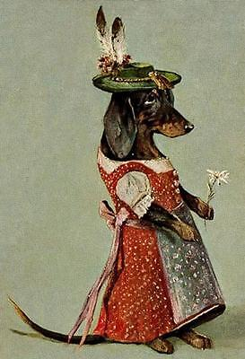 DOGS, FEMALE DACHSHUND IN ALPINE COSTUME, HOLDING AN EDELWEISS, MAGNET](Dachshund In Costume)