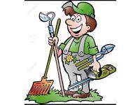 The local gardener