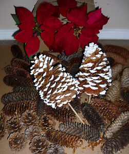Poinsettia and Pinecones .. As shown .. Clean,SmokeFree