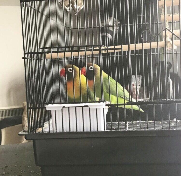 2 birds & cage