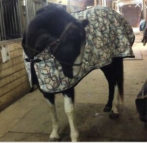 "Adorable Custom fleece lined Cooler 80"" (horse blanket)"