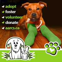 SIGN UP YOUR BAND for our music fundraiser for AARCS
