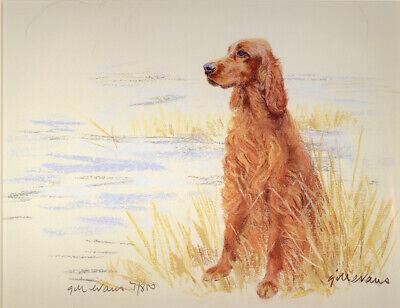 IRISH RED SETTER GUNDOG DOG ART LIMITED EDITION PRINT - Sitting on the Bank