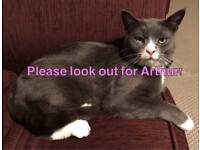 MISSING Grey & White Male Cat