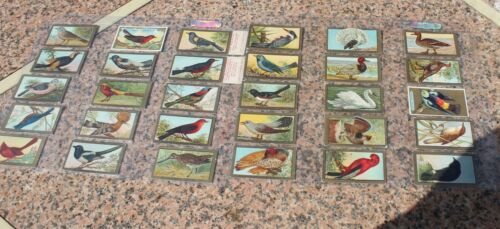 Vintage Tobacco cards  Bird series Sweet Caporal Cigarettes (32) 1910