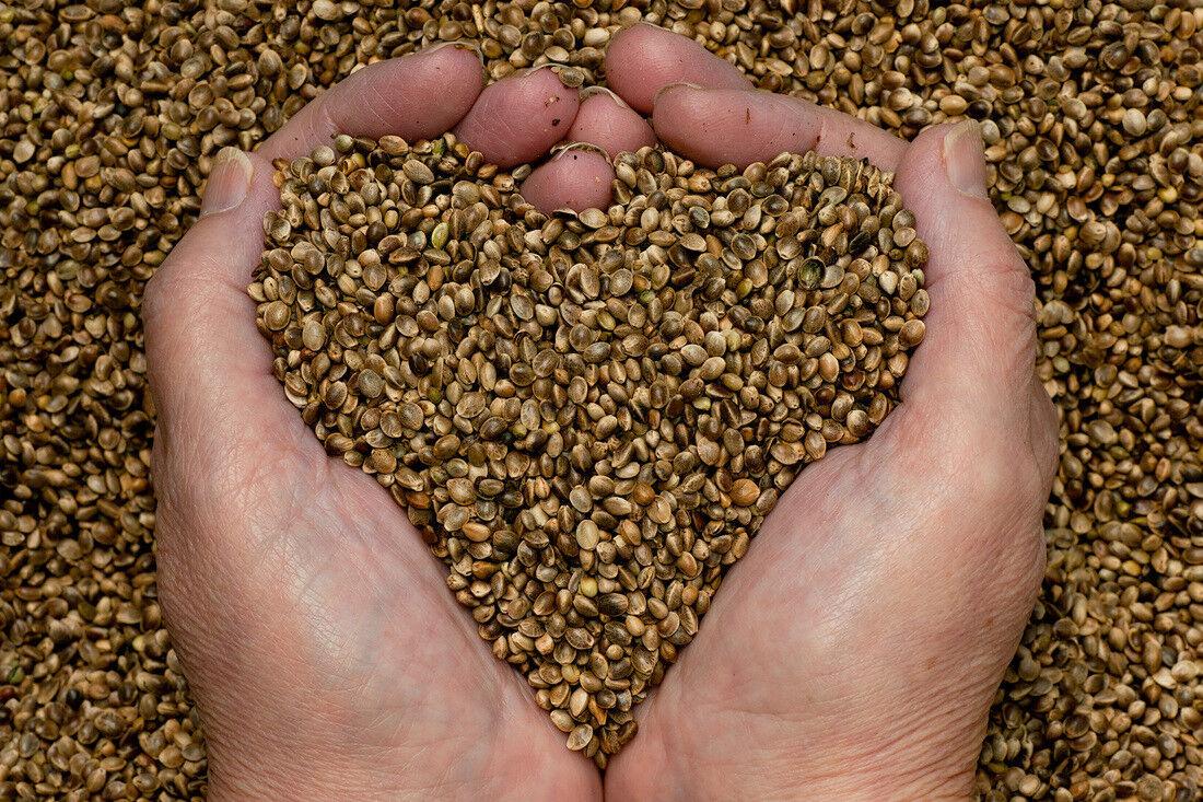 essential fatty acids - Organic Hemp Seed Oil 1400mg 1B - herbal protein source 5