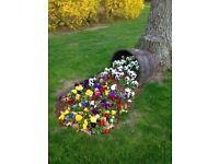 Solid oak half ex-whisky barrel planter / garden plant/ flower pot / Vintage DIY