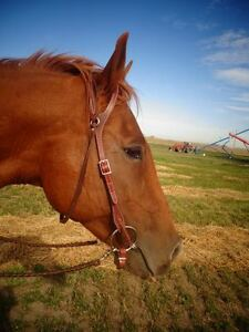 QH/Arabian mare for sale *PRICE REDUCED!!*