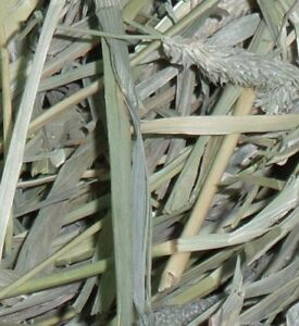 ISO PURE TIMOTHY OR ORCHARD GRASS HAY FOR SMALL PETS