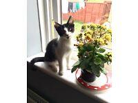 4 month male kitten