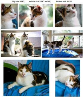 Miki & Niki need foster care or new home Killara Ku-ring-gai Area Preview