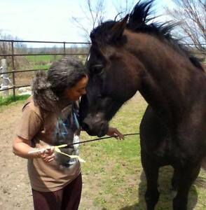 The Horse Medicine Collective Needs Your Help Peterborough Peterborough Area image 6