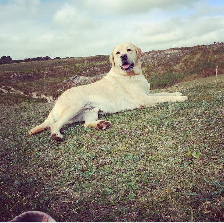 Professional dog walking and pet care services - including house visits and day stays