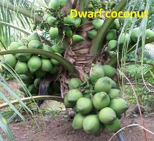 Exotic Tropical Fruit Trees and Plants for sale Leeming Melville Area Preview
