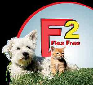 Fleas infesting your pets and Dwelling- Belleville Belleville Area image 6
