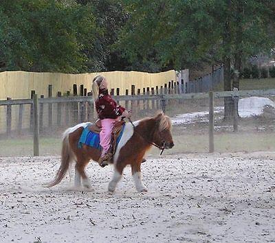 Brown Leather Western Bridle & Reins w/ Silver Ferrules Mini Horse Shetland Pony