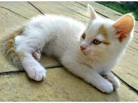 😺😺Male kittens, house trained, deflead & dewormed, friendly