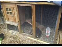 *Free rabbit hutch